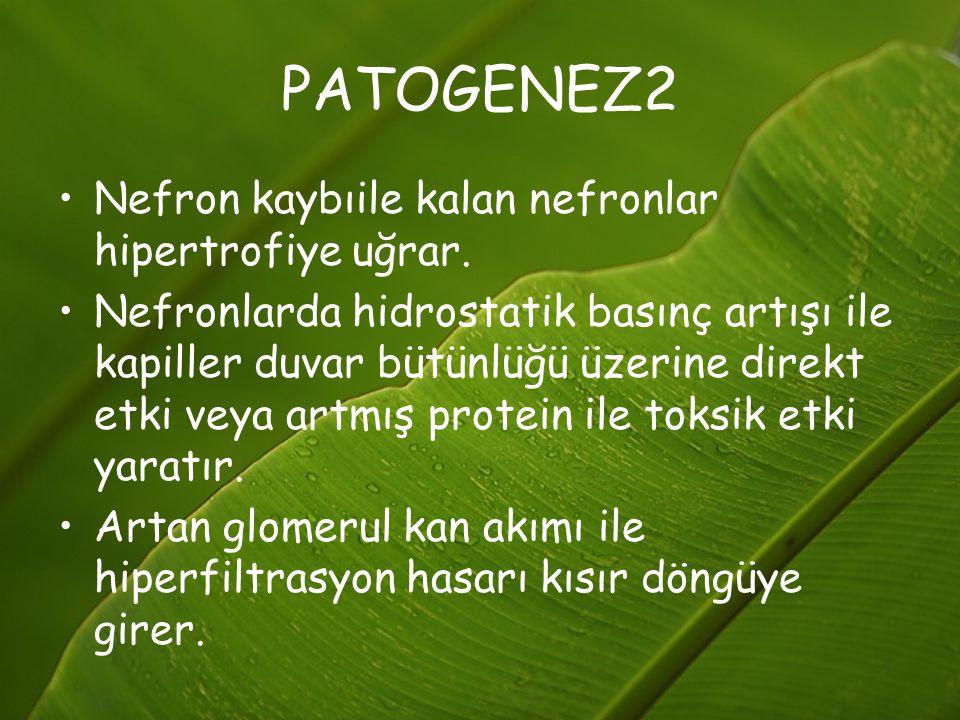 PATOGENEZ2 Nefron kaybıile kalan nefronlar hipertrofiye uğrar.