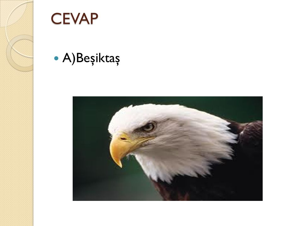 CEVAP A)Beşiktaş