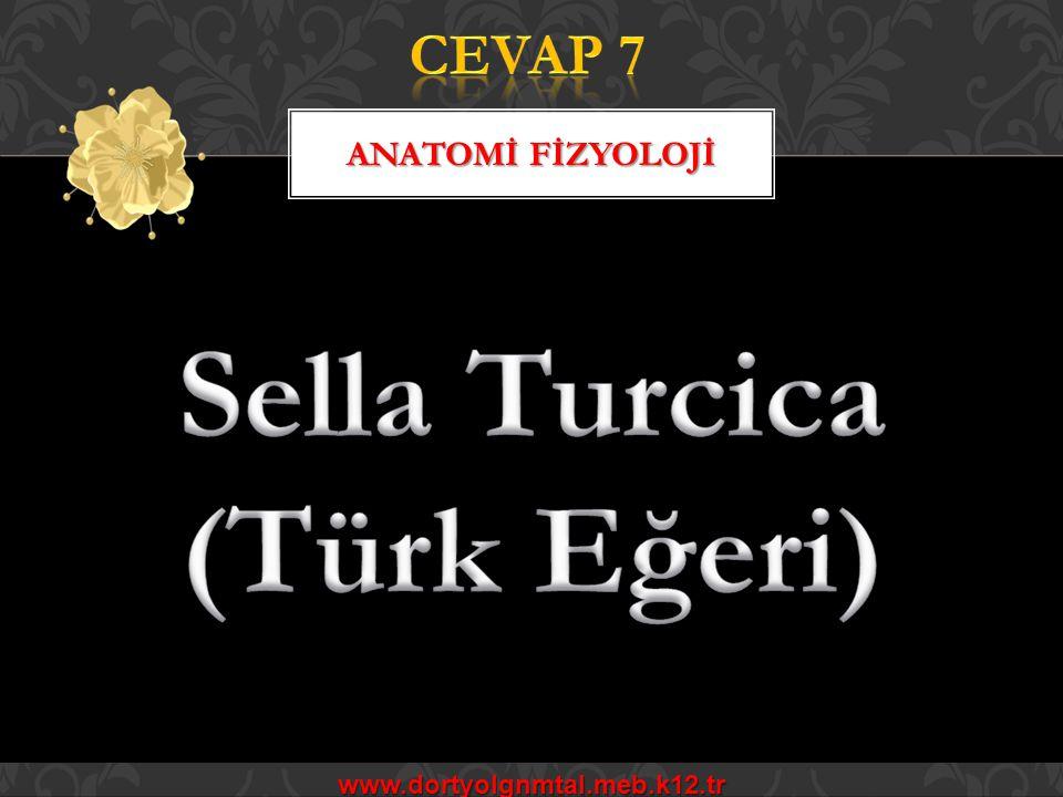Sella Turcica (Türk Eğeri)