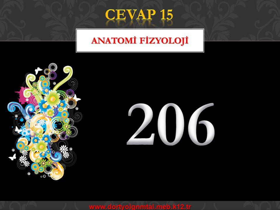 CEVAP 15 ANATOMİ FİZYOLOJİ 206 www.dortyolgnmtal.meb.k12.tr