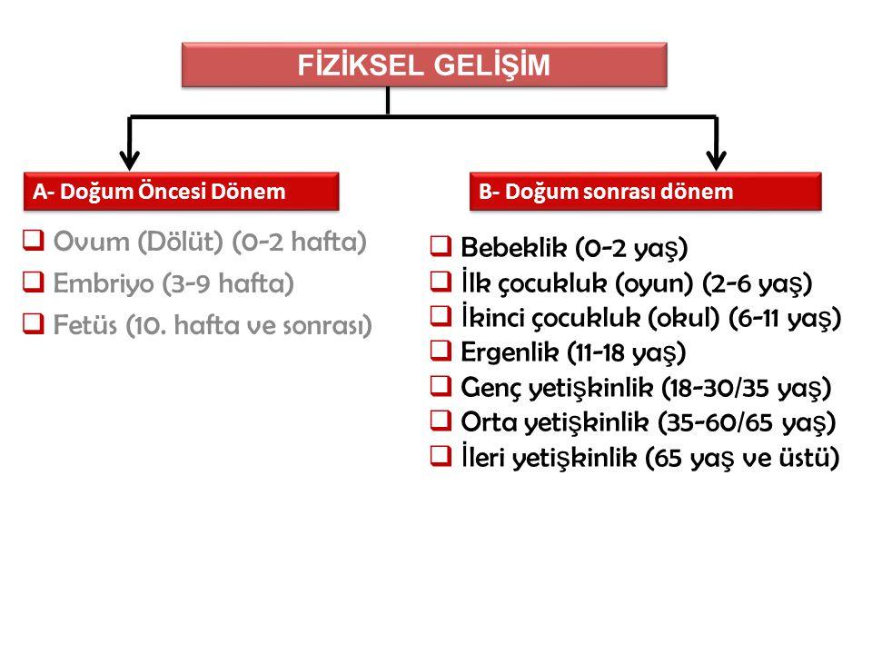 Fetüs (10. hafta ve sonrası) Bebeklik (0-2 yaş)