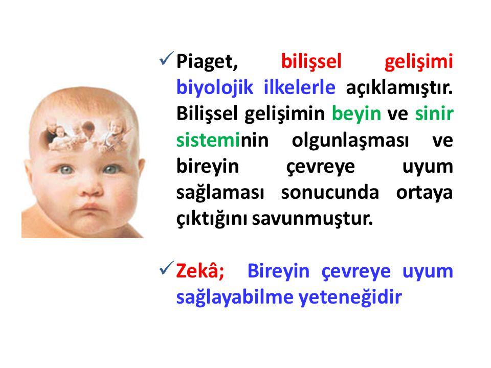 Piaget, bilişsel gelişimi biyolojik ilkelerle açıklamıştır
