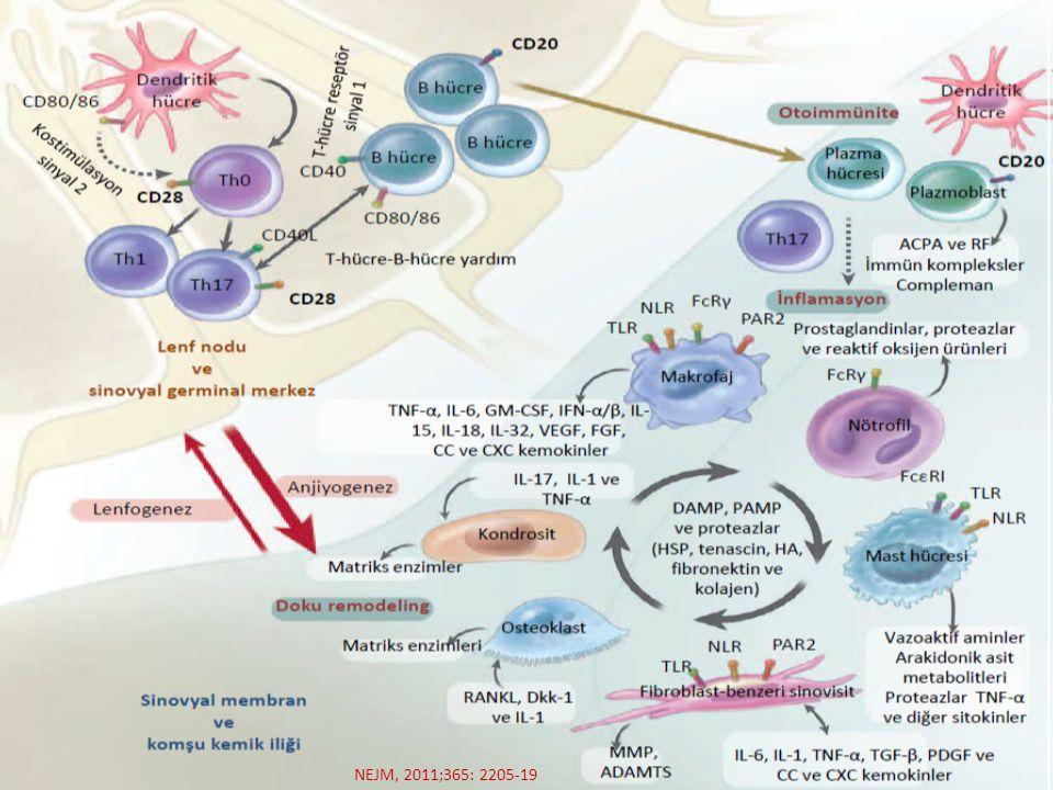 Zaten romatoid artritin etyopatogenezini kısaca özetleyecek olursak: