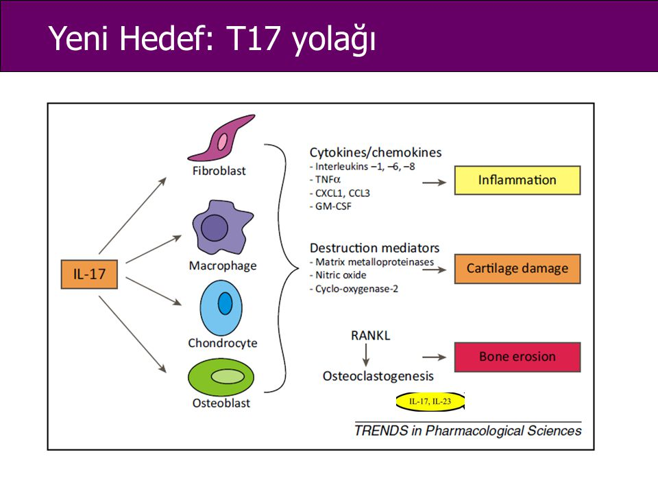 Yeni Hedef: T17 yolağı