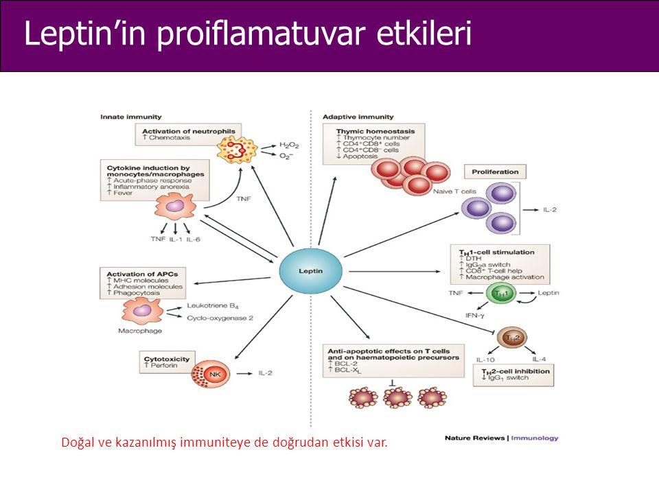 Leptin'in proiflamatuvar etkileri