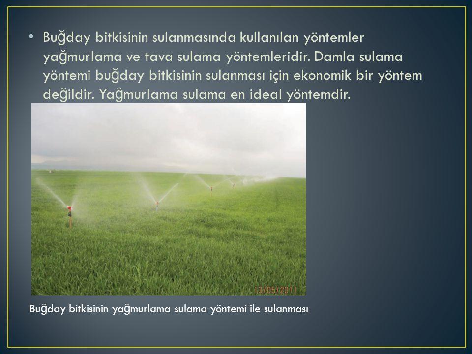 Buğday bitkisinin sulanmasında kullanılan yöntemler yağmurlama ve tava sulama yöntemleridir. Damla sulama yöntemi buğday bitkisinin sulanması için ekonomik bir yöntem değildir. Yağmurlama sulama en ideal yöntemdir.