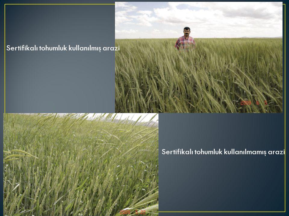 Sertifikalı tohumluk kullanılmış arazi