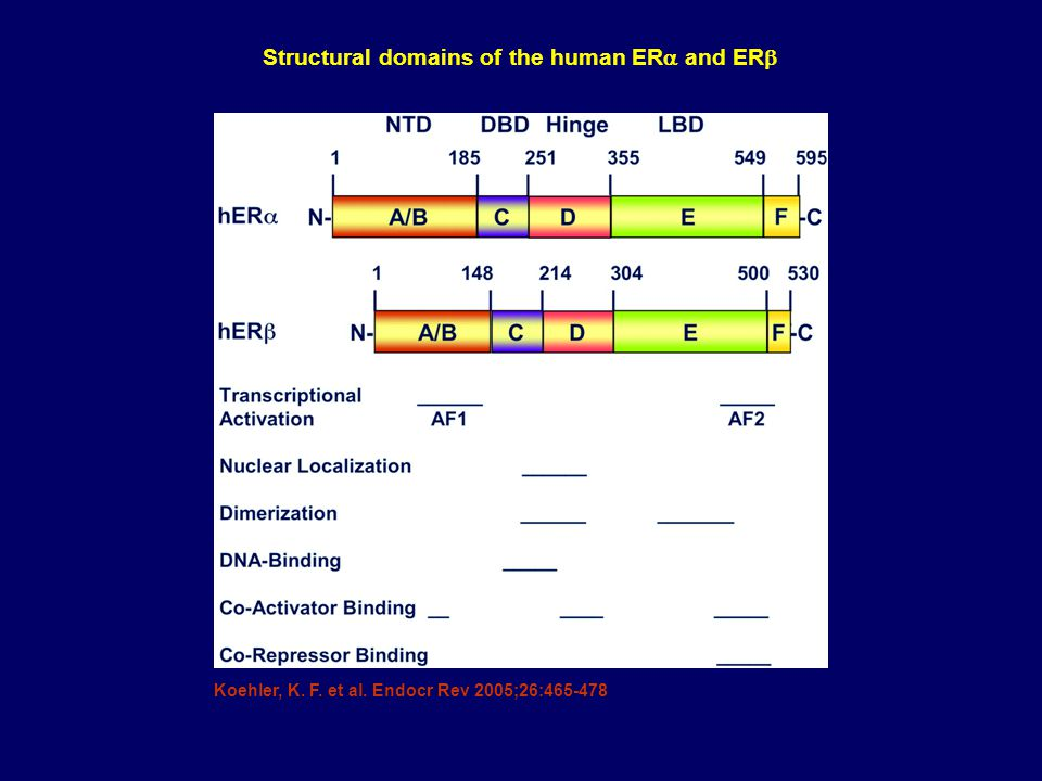 Structural domains of the human ERa and ERb