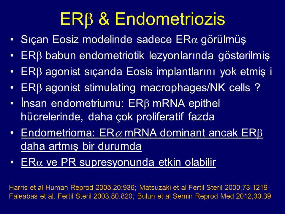 ERb & Endometriozis Sıçan Eosiz modelinde sadece ERa görülmüş
