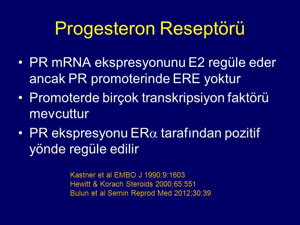 Progesteron Reseptörü