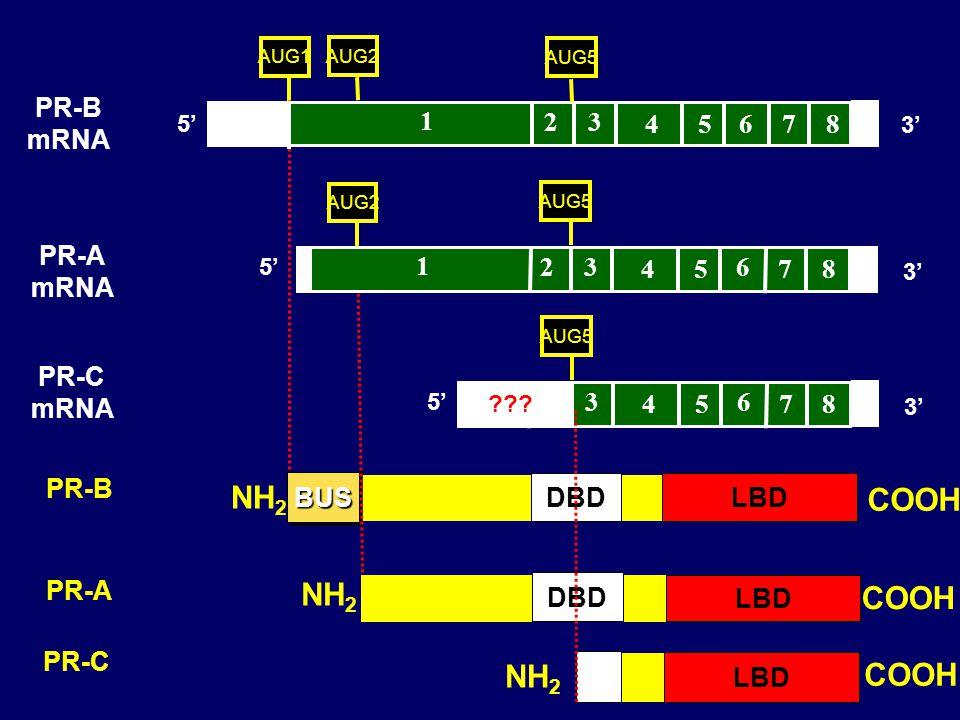 NH2 COOH NH2 COOH NH2 COOH PR-B mRNA 1 2 3 4 5 6 7 8 PR-A mRNA 1 2 3 4