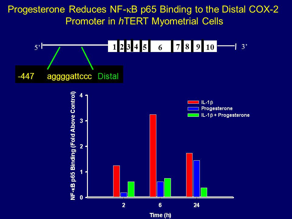 Progesterone Reduces NF-kB p65 Binding to the Distal COX-2
