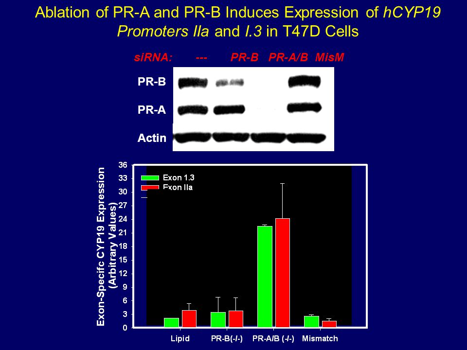 Ablation of PR-A and PR-B Induces Expression of hCYP19