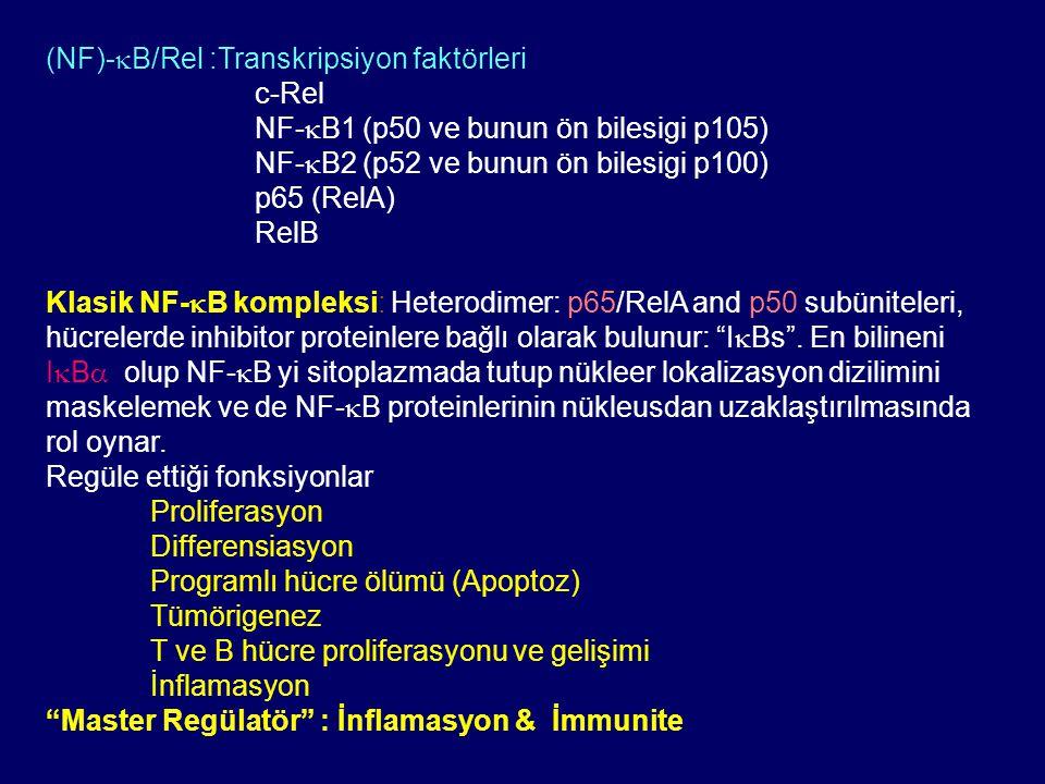 (NF)-kB/Rel :Transkripsiyon faktörleri