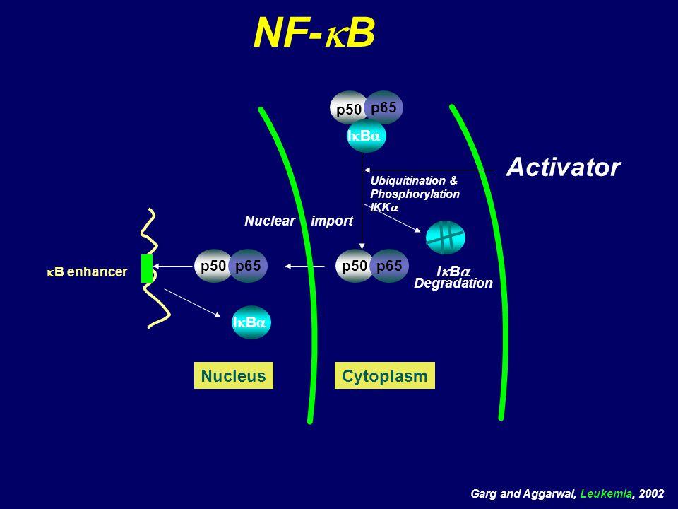 NF-kB Activator Nucleus Cytoplasm p50 p65 IkBa p50 p65 p50 p65 IkBa