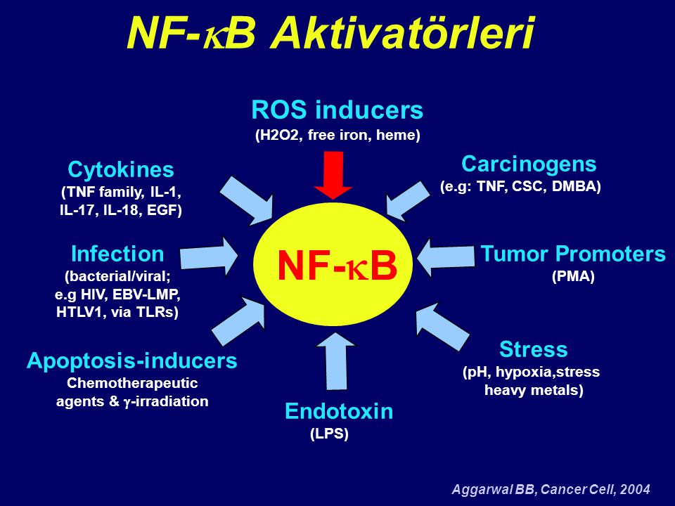NF-kB Aktivatörleri NF-kB ROS inducers Carcinogens Cytokines Infection