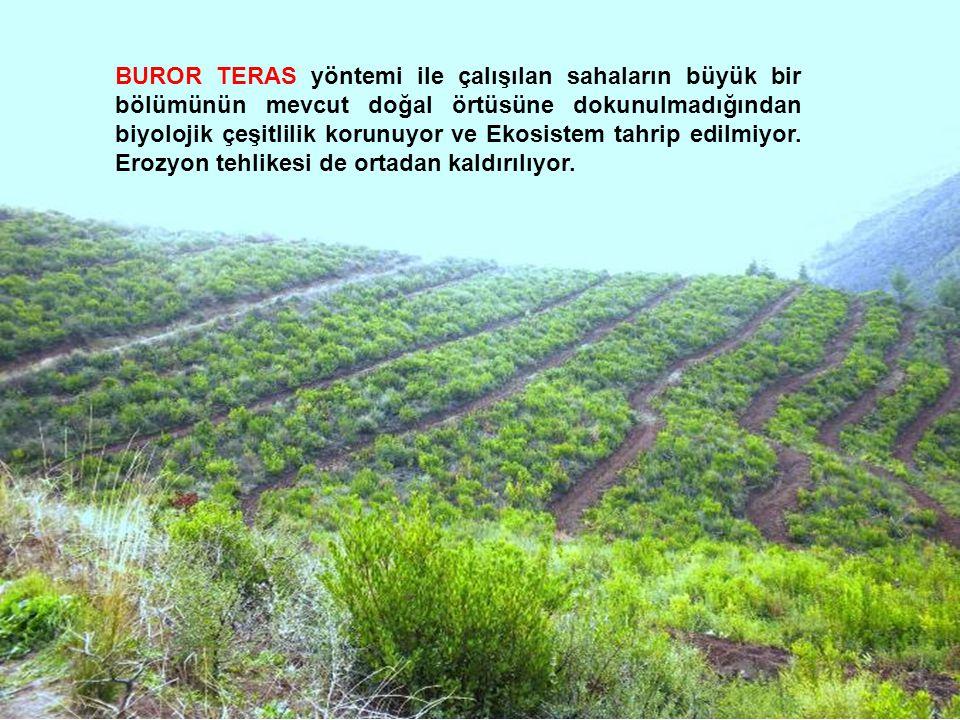 BUROR TERAS yöntemi ile çalışılan sahaların büyük bir bölümünün mevcut doğal örtüsüne dokunulmadığından biyolojik çeşitlilik korunuyor ve Ekosistem tahrip edilmiyor.