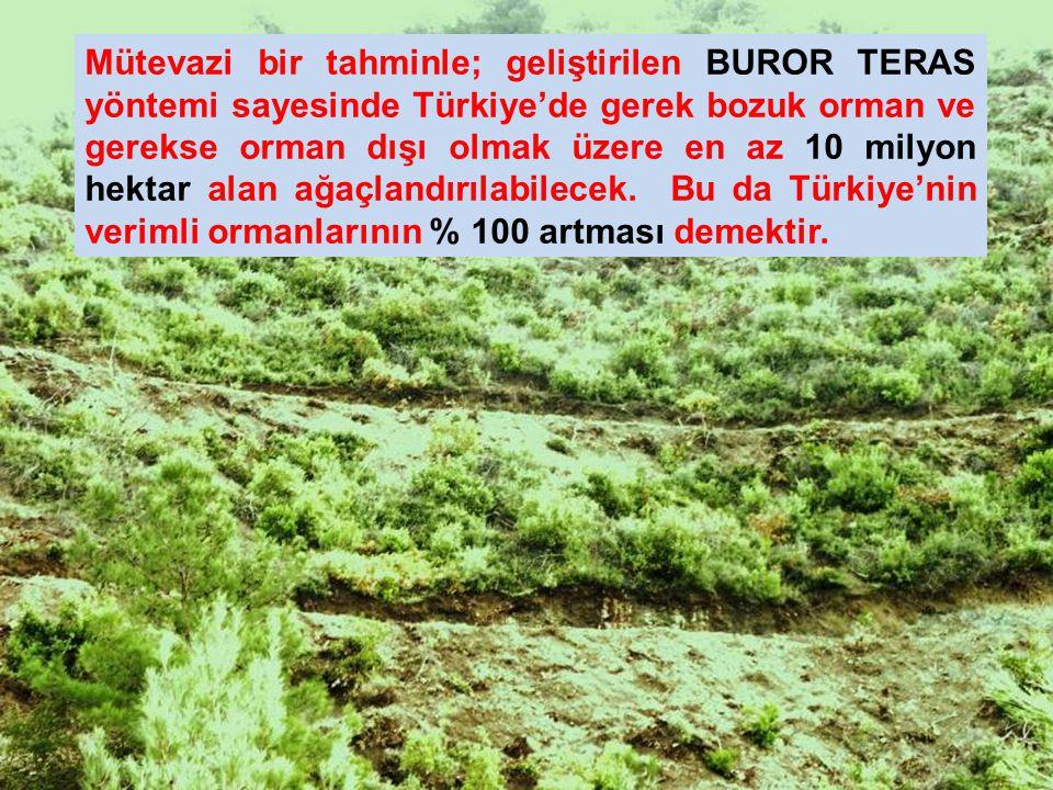 Mütevazi bir tahminle; geliştirilen BUROR TERAS yöntemi sayesinde Türkiye'de gerek bozuk orman ve gerekse orman dışı olmak üzere en az 10 milyon hektar alan ağaçlandırılabilecek.