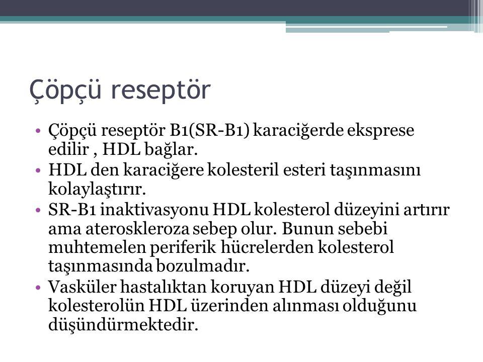 Çöpçü reseptör Çöpçü reseptör B1(SR-B1) karaciğerde eksprese edilir , HDL bağlar. HDL den karaciğere kolesteril esteri taşınmasını kolaylaştırır.