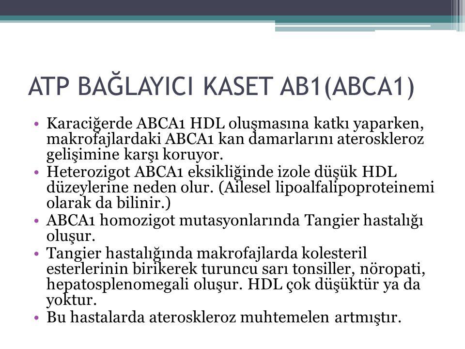 ATP BAĞLAYICI KASET AB1(ABCA1)