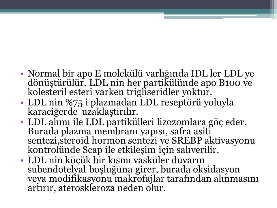 Normal bir apo E molekülü varlığında IDL ler LDL ye dönüştürülür