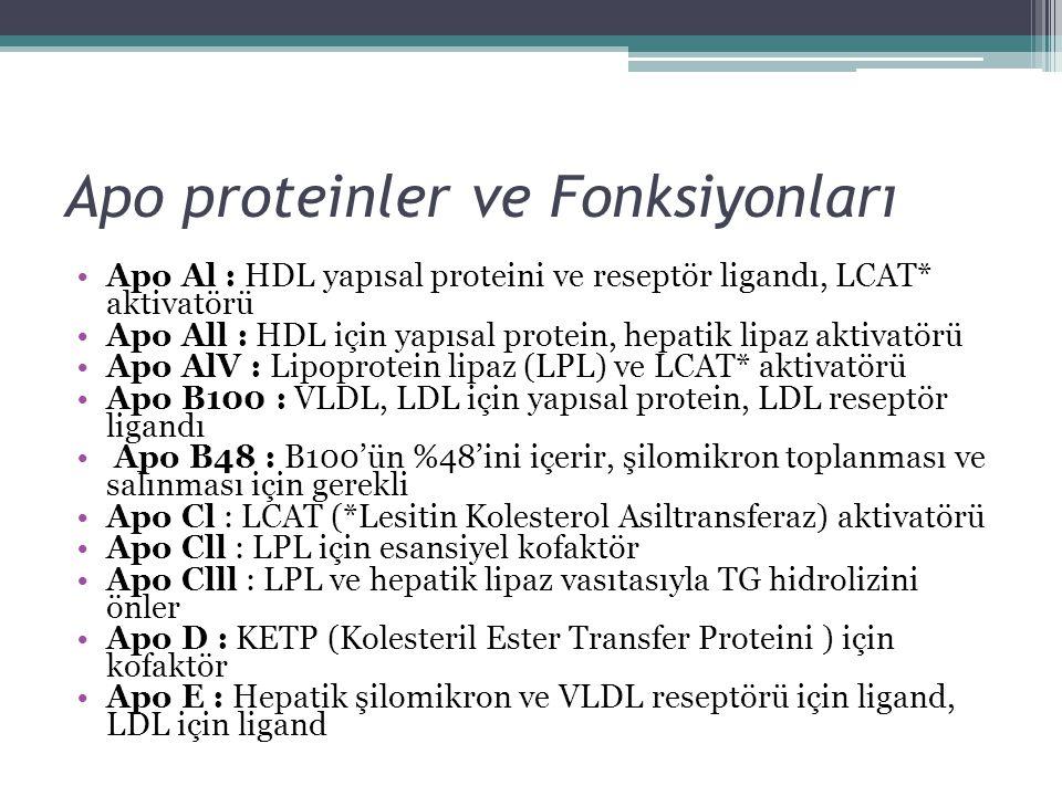 Apo proteinler ve Fonksiyonları