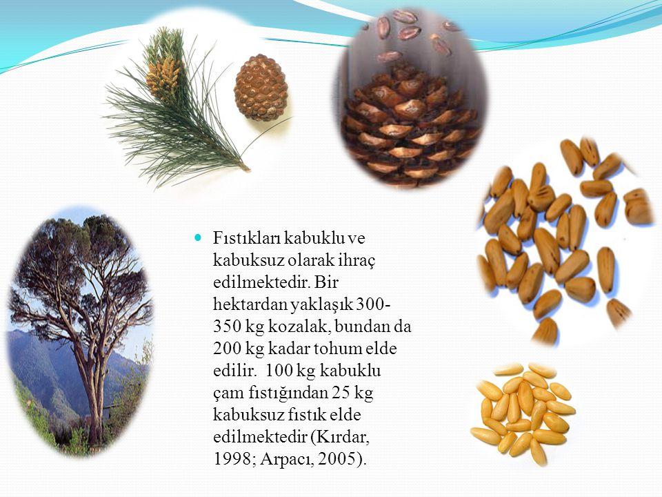 Fıstıkları kabuklu ve kabuksuz olarak ihraç edilmektedir