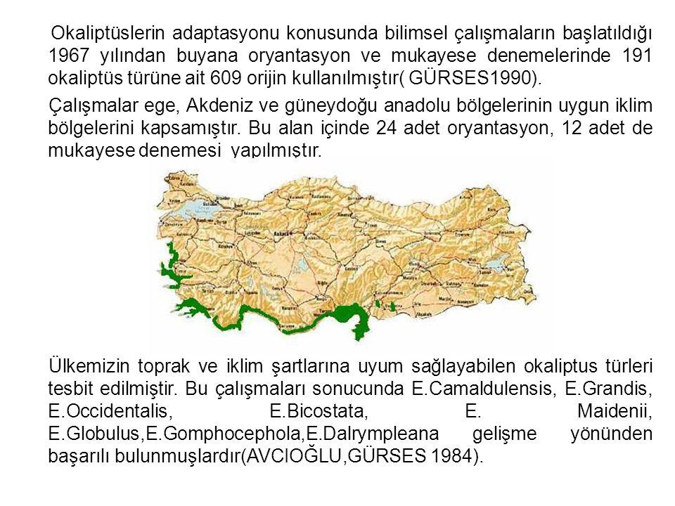 Okaliptüslerin adaptasyonu konusunda bilimsel çalışmaların başlatıldığı 1967 yılından buyana oryantasyon ve mukayese denemelerinde 191 okaliptüs türüne ait 609 orijin kullanılmıştır( GÜRSES1990).