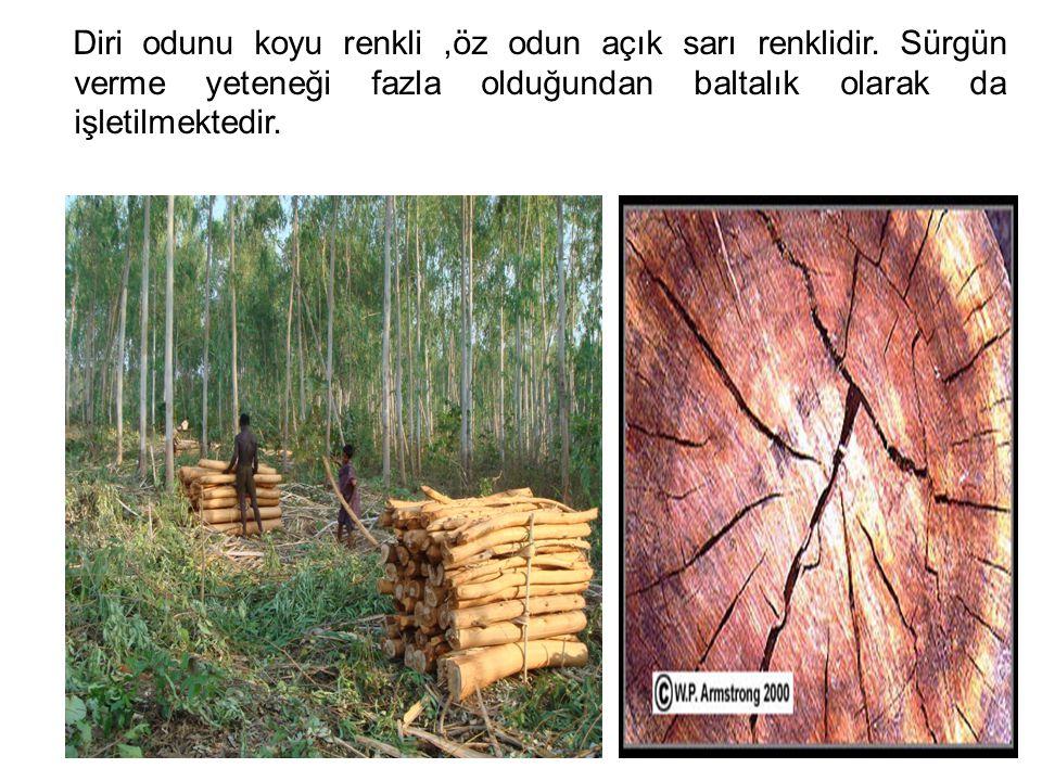 Diri odunu koyu renkli ,öz odun açık sarı renklidir