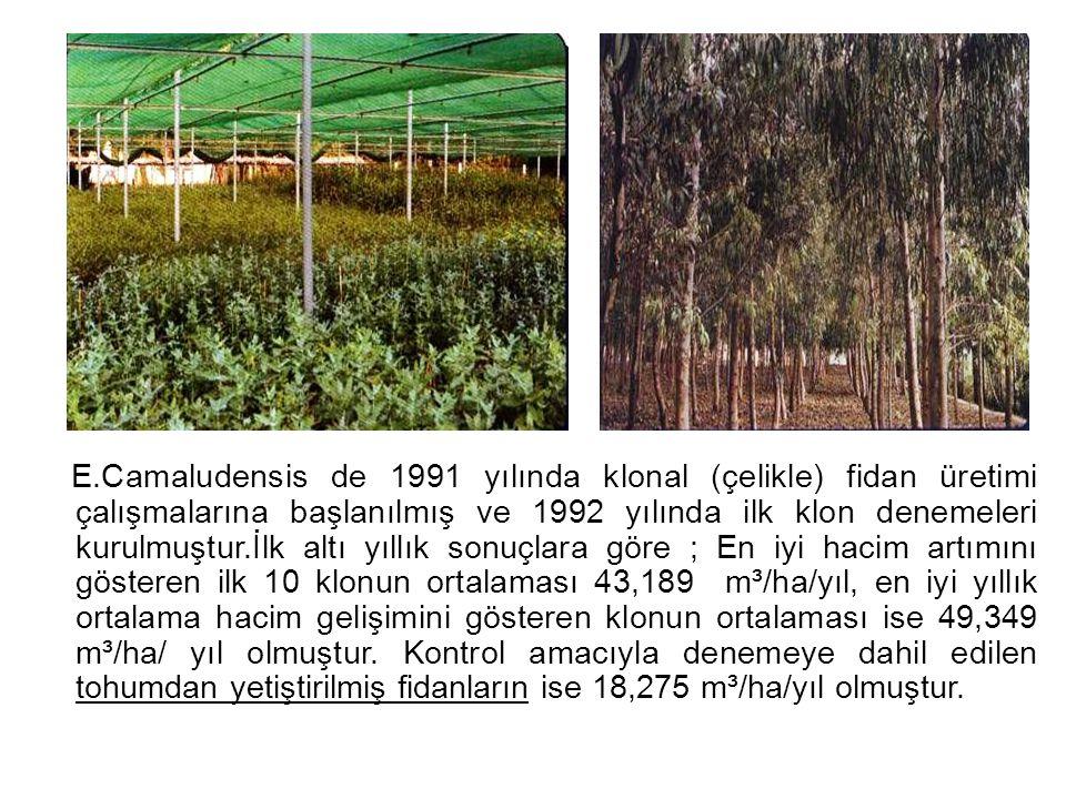 E.Camaludensis de 1991 yılında klonal (çelikle) fidan üretimi çalışmalarına başlanılmış ve 1992 yılında ilk klon denemeleri kurulmuştur.İlk altı yıllık sonuçlara göre ; En iyi hacim artımını gösteren ilk 10 klonun ortalaması 43,189 m³/ha/yıl, en iyi yıllık ortalama hacim gelişimini gösteren klonun ortalaması ise 49,349 m³/ha/ yıl olmuştur.