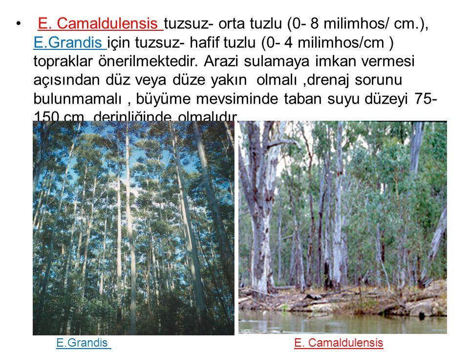 E. Camaldulensis tuzsuz- orta tuzlu (0- 8 milimhos/ cm. ), E