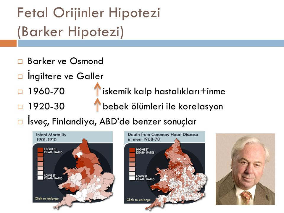 Fetal Orijinler Hipotezi (Barker Hipotezi)