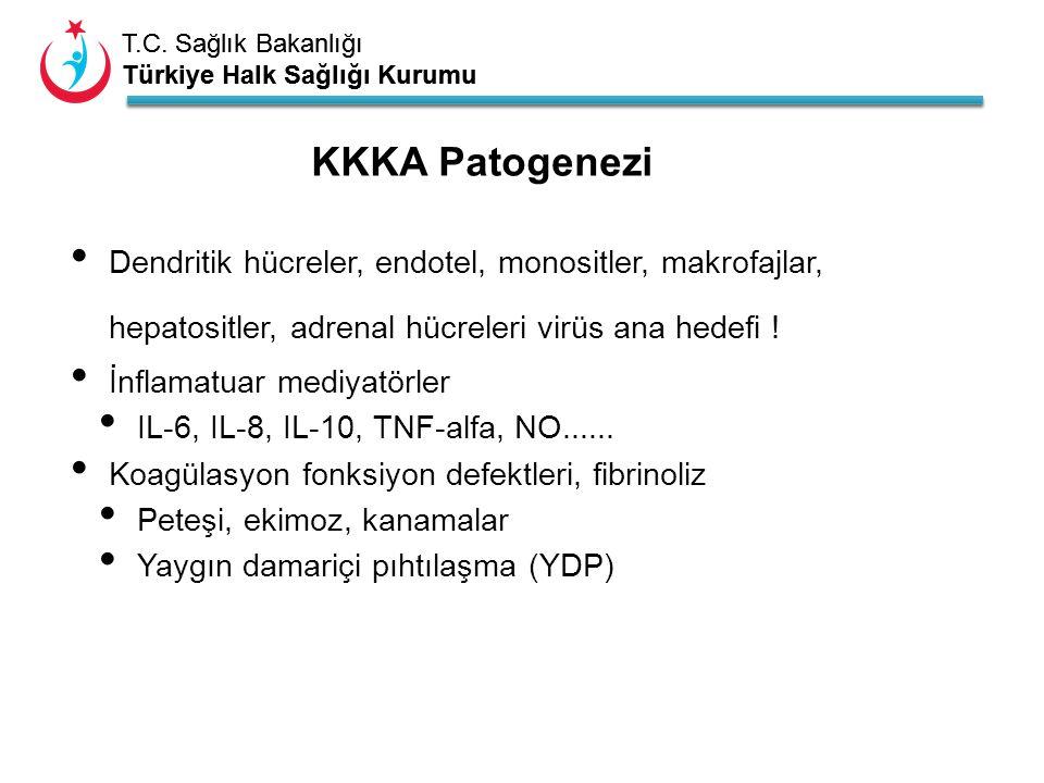 KKKA Patogenezi Dendritik hücreler, endotel, monositler, makrofajlar, hepatositler, adrenal hücreleri virüs ana hedefi !