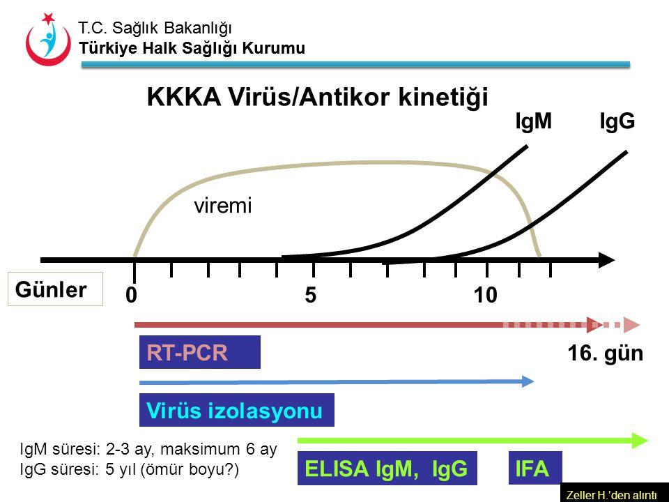 KKKA Virüs/Antikor kinetiği
