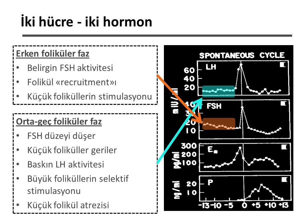 İki hücre - iki hormon Erken foliküler faz Belirgin FSH aktivitesi