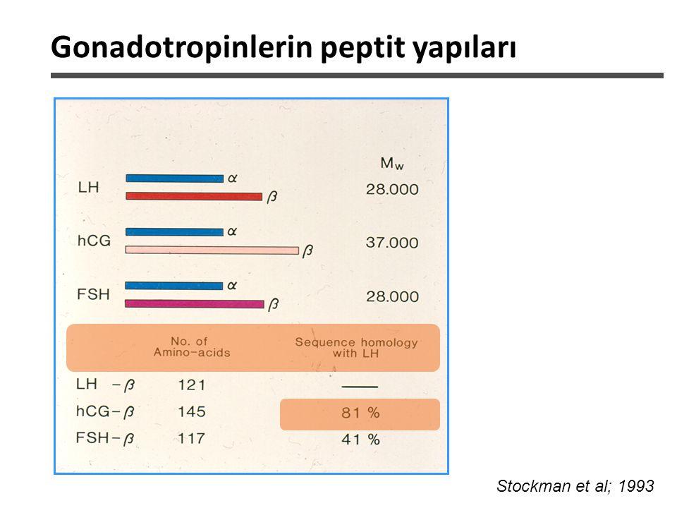 Gonadotropinlerin peptit yapıları