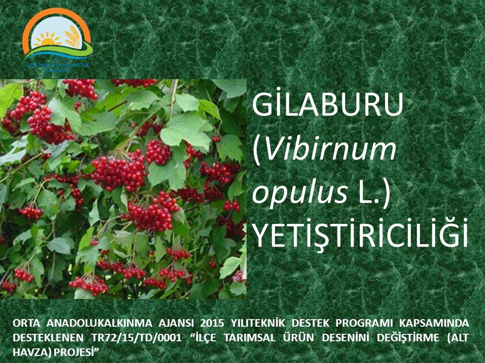 GİLABURU (Vibirnum opulus L.) YETİŞTİRİCİLİĞİ