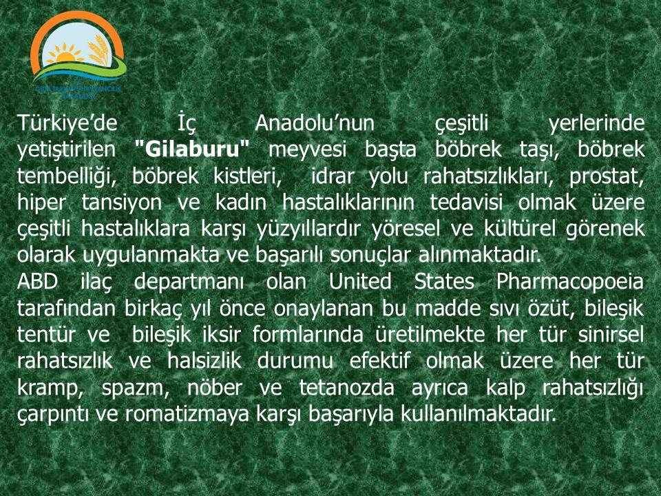 Türkiye'de İç Anadolu'nun çeşitli yerlerinde yetiştirilen Gilaburu meyvesi başta böbrek taşı, böbrek tembelliği, böbrek kistleri, idrar yolu rahatsızlıkları, prostat, hiper tansiyon ve kadın hastalıklarının tedavisi olmak üzere çeşitli hastalıklara karşı yüzyıllardır yöresel ve kültürel görenek olarak uygulanmakta ve başarılı sonuçlar alınmaktadır.