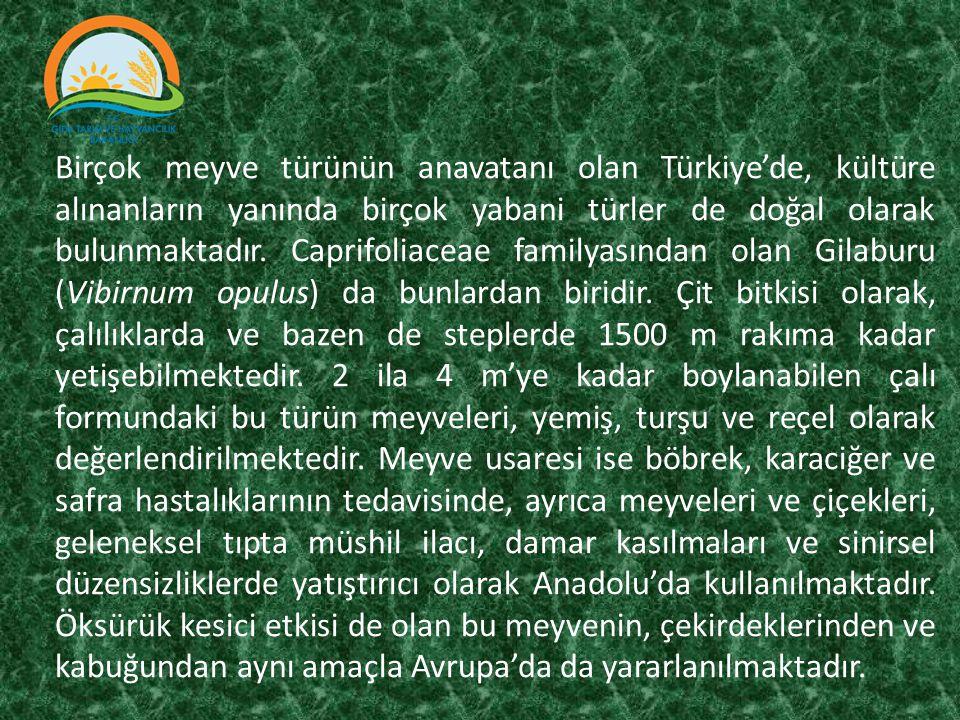 Birçok meyve türünün anavatanı olan Türkiye'de, kültüre alınanların yanında birçok yabani türler de doğal olarak bulunmaktadır.