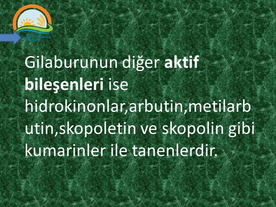 Gilaburunun diğer aktif bileşenleri ise hidrokinonlar,arbutin,metilarbutin,skopoletin ve skopolin gibi kumarinler ile tanenlerdir.