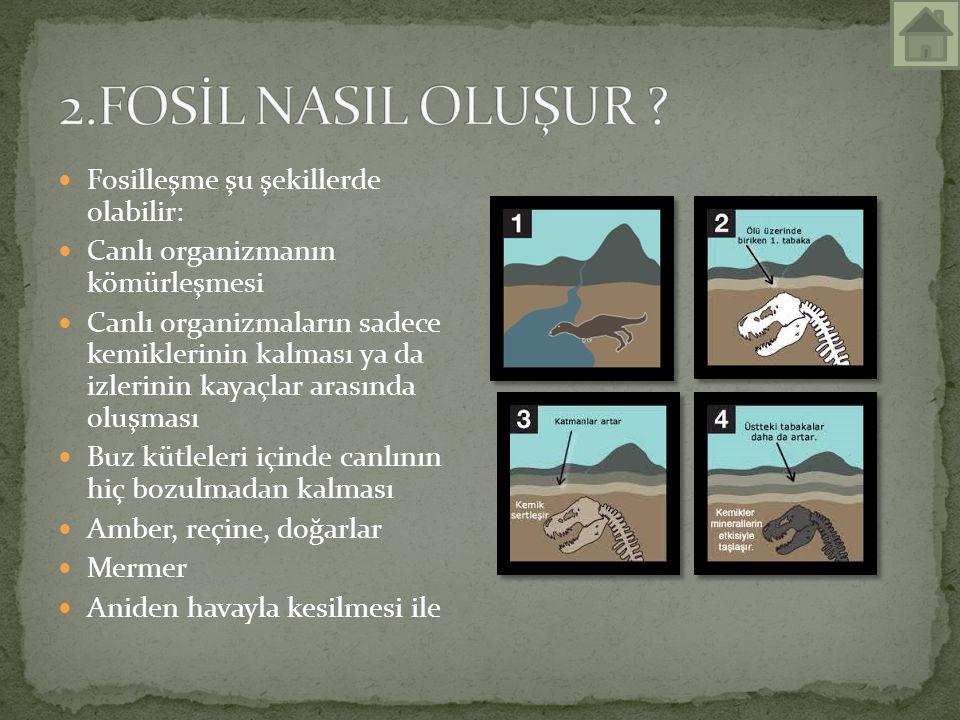 2.FOSİL NASIL OLUŞUR Fosilleşme şu şekillerde olabilir: