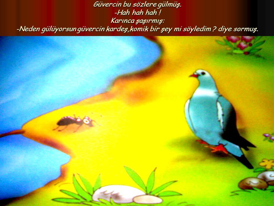 Güvercin bu sözlere gülmüş. -Hah hah hah