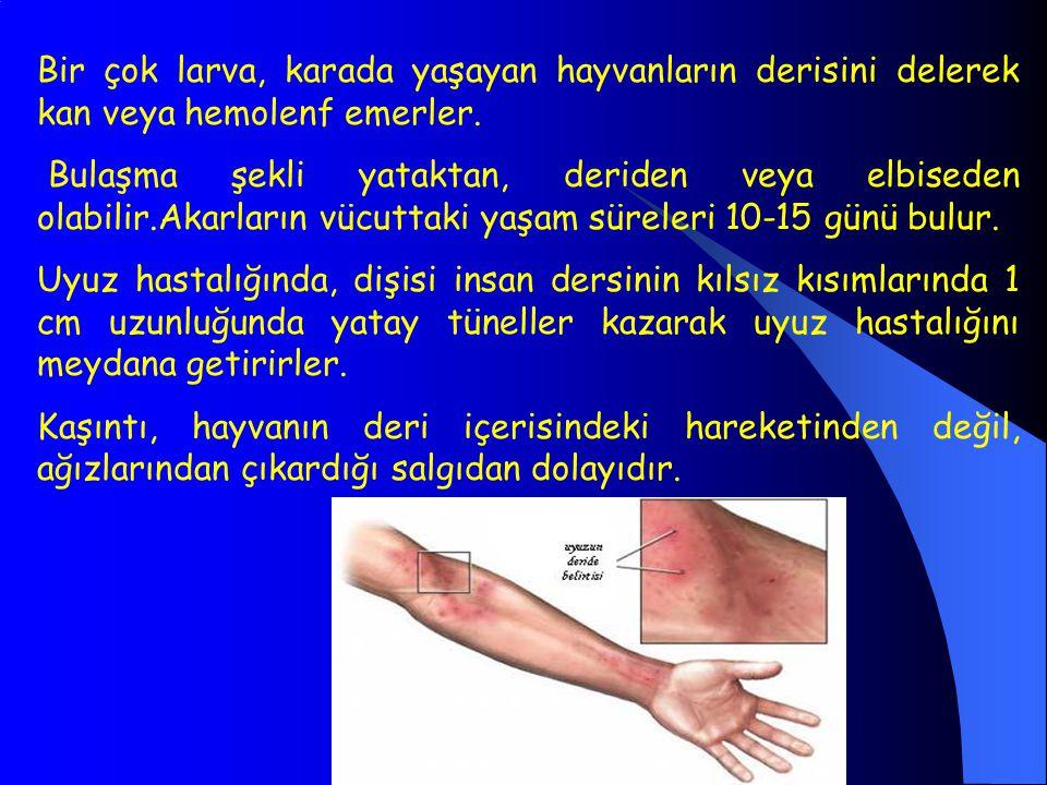 Bir çok larva, karada yaşayan hayvanların derisini delerek kan veya hemolenf emerler.