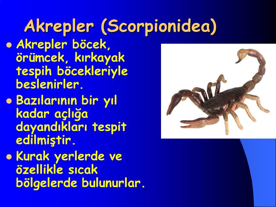 Akrepler (Scorpionidea)