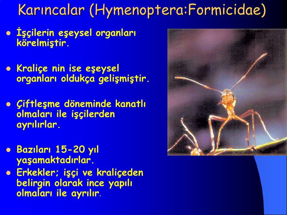 Karıncalar (Hymenoptera:Formicidae)