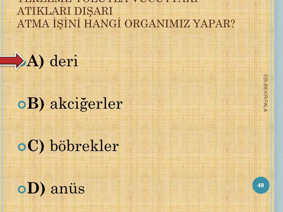 A) deri B) akciğerler C) böbrekler D) anüs