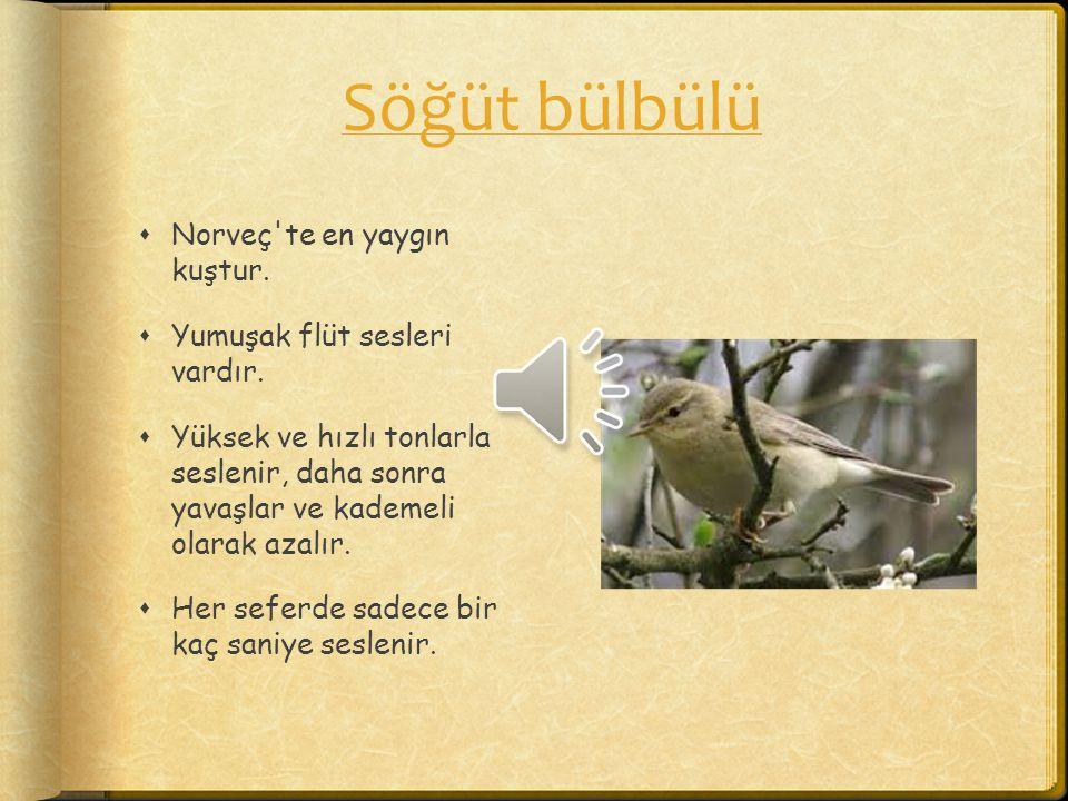 Söğüt bülbülü Norveç te en yaygın kuştur. Yumuşak flüt sesleri vardır.