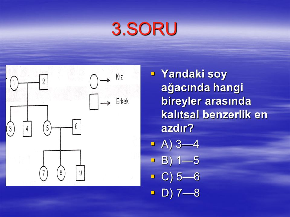 3.SORU Yandaki soy ağacında hangi bireyler arasında kalıtsal benzerlik en azdır A) 3—4. B) 1—5. C) 5—6.
