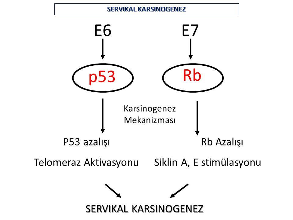 SERVIKAL KARSINOGENEZ