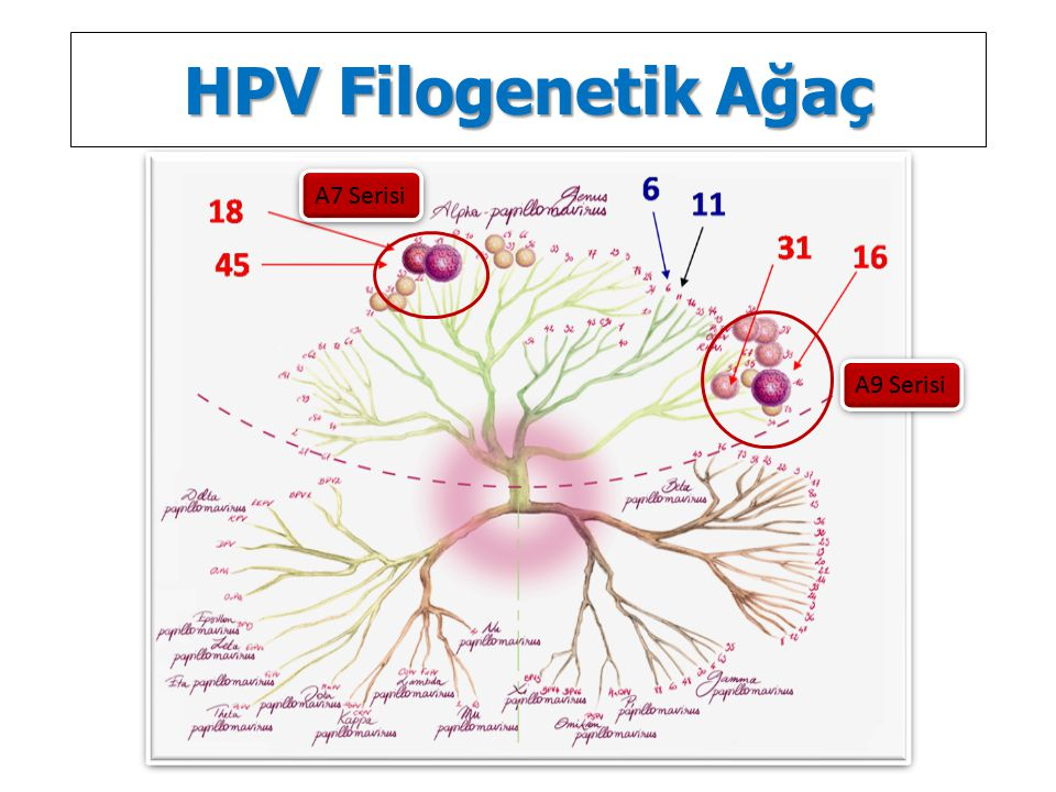 HPV Filogenetik Ağaç A7 Serisi A9 Serisi